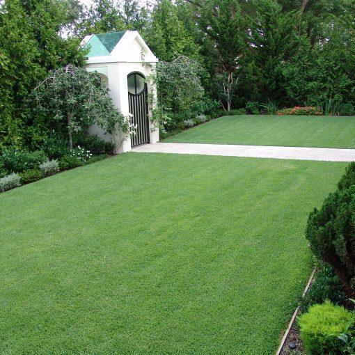 Zoysia Grass 27185